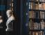 EU-Urheberrechtsreform Artikel 13